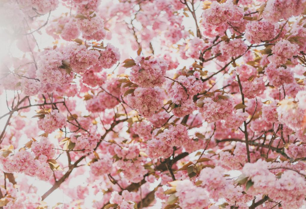 pollenflug